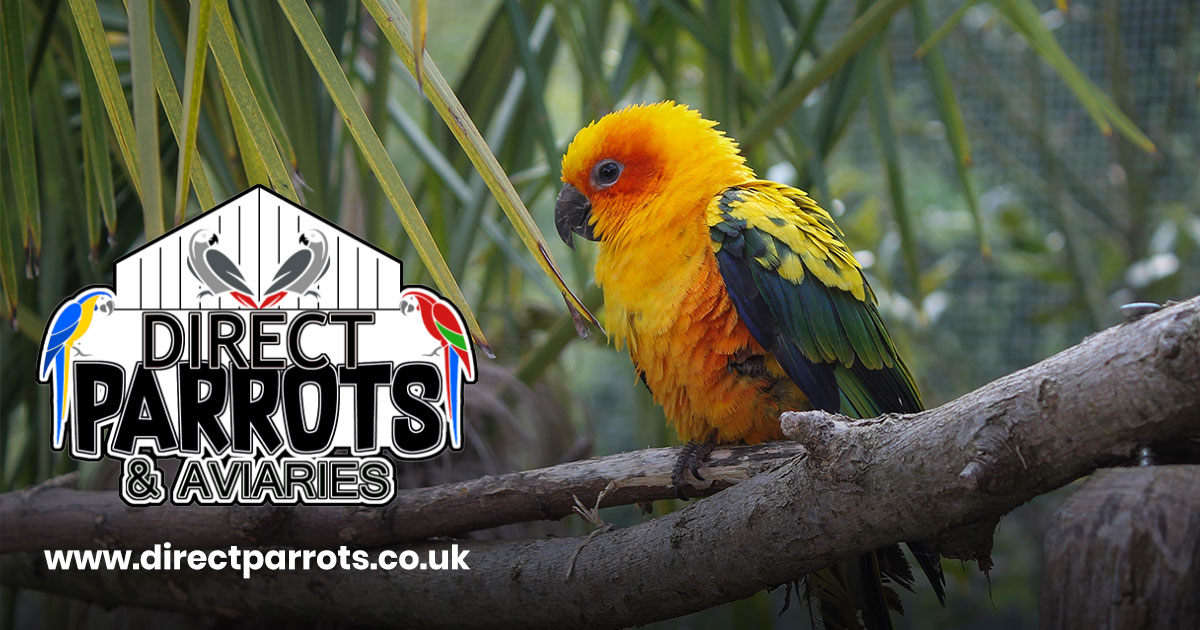 Buy Parrots, Food, Accessories and Aviaries | Direct Parrots