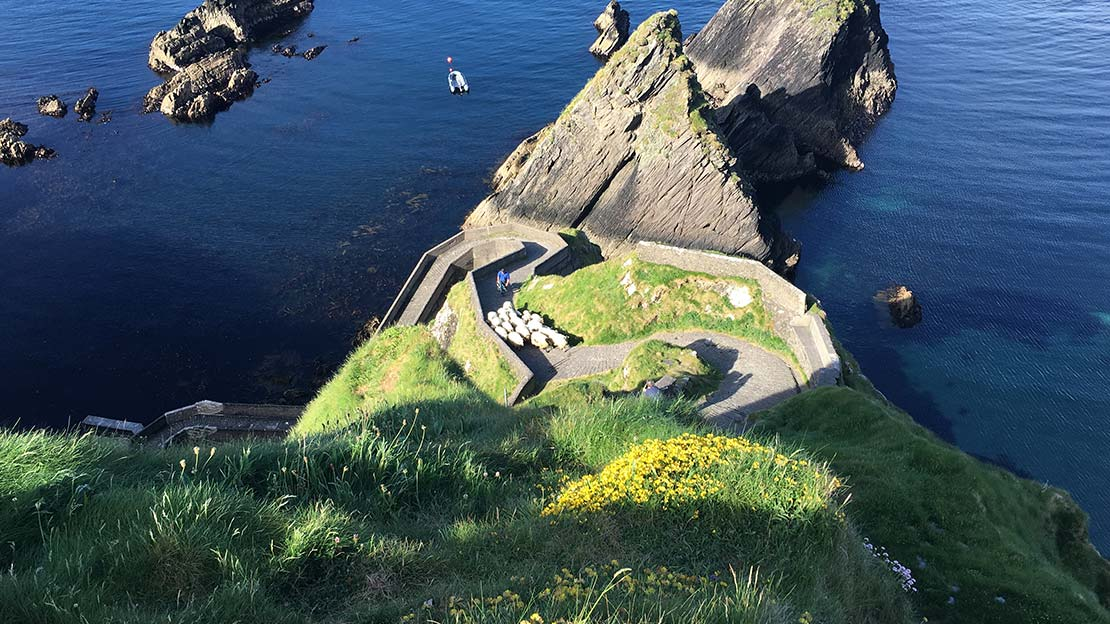 Mountain Ways Ireland - Walking Holidays in Ireland: 9 of The Best Routes - The Dingle Way Slea Head road winding down to sea with flock of sheep